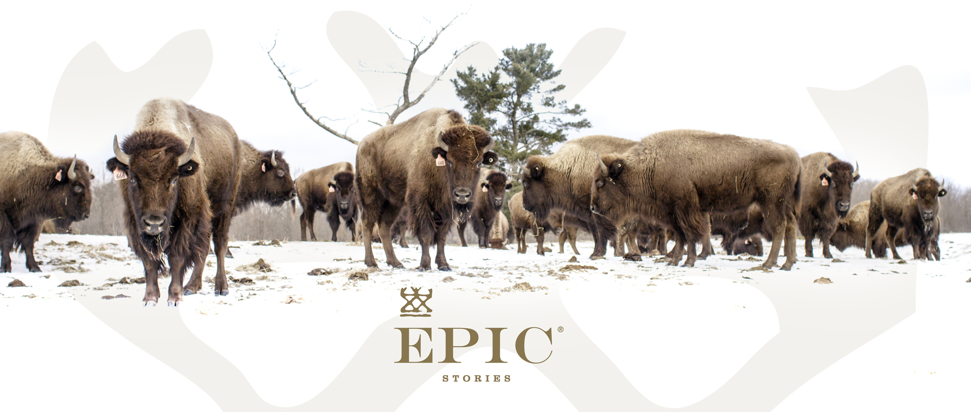 EPIC Provisions | Full Production